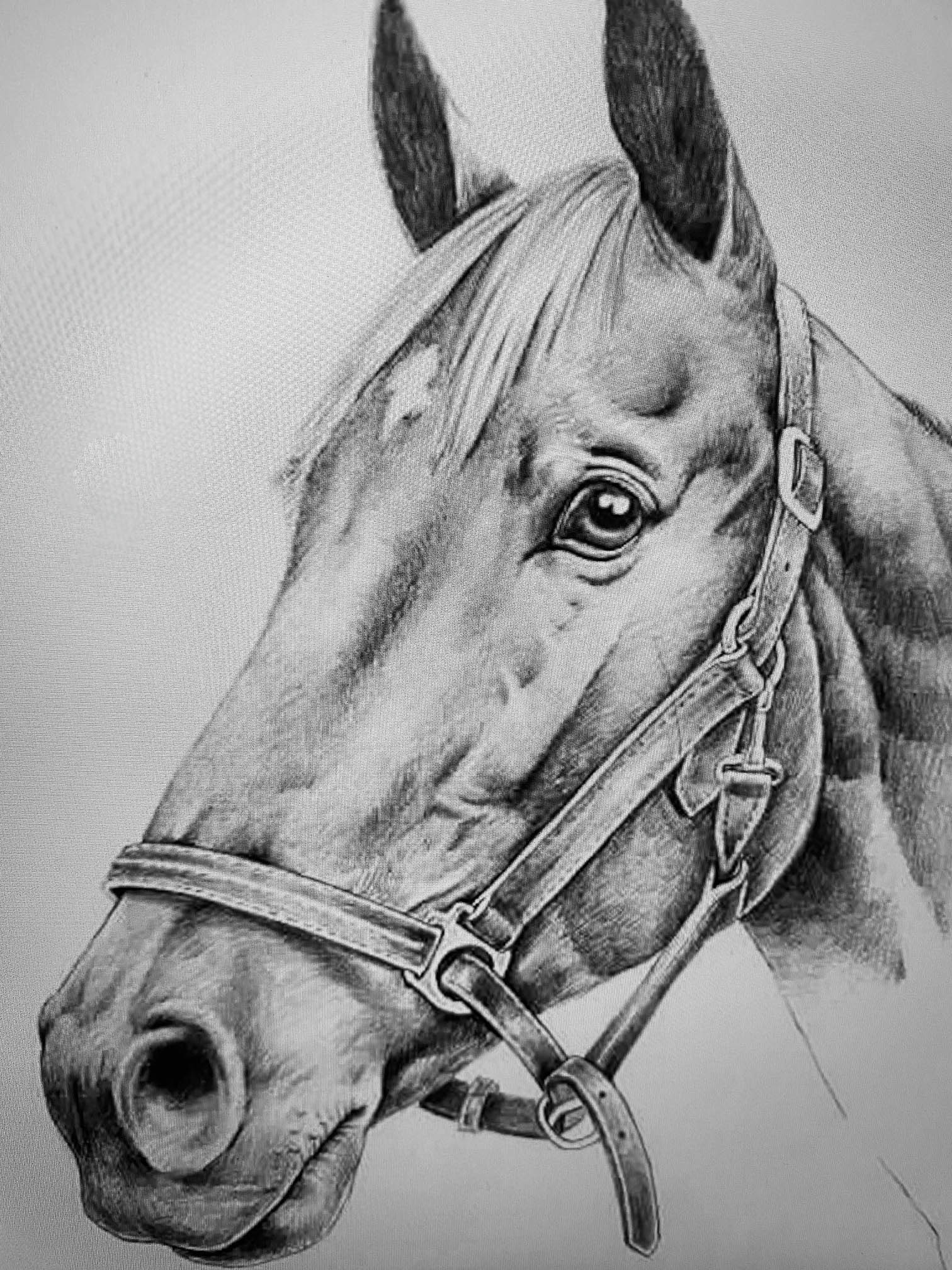 Horse Drawing by Margaret Ashmore